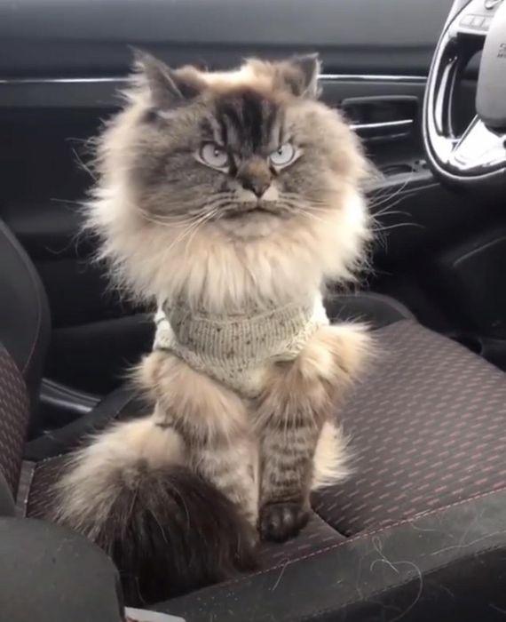 кот немного не в настроении