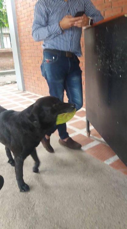 Собака покупает еду за листву листья