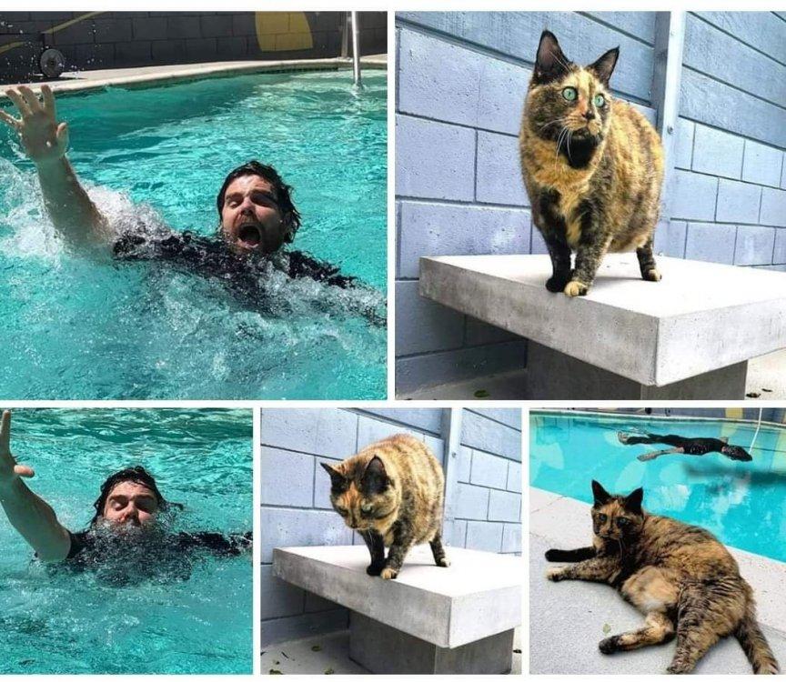 cat_saves_man.jpg