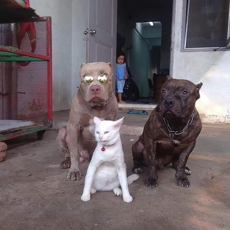 cat_big_boss.jpg